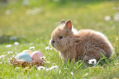 photo of bunny sitting in green grass beside colored eggs