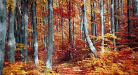 Photo of forest in the fall