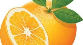 Drawing of Orange