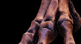 Trex foot bones