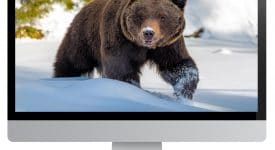 Grizzly on Computer